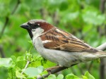 In Praise of Sparrows