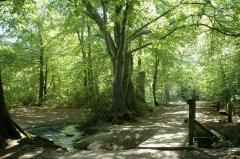 Trees_1_large_image