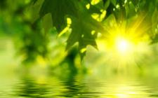 sunlight on green water