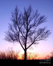 bare-tree-at-sunset-douglas-taylor